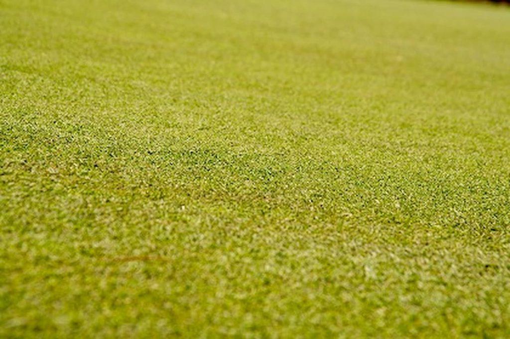 グリーンの芝生